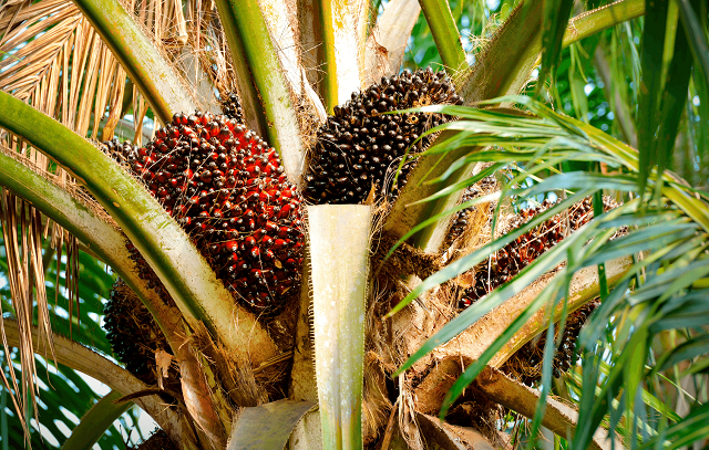 The Palm Oil Industry Association holds AGM