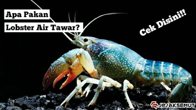 makanan lobster air tawar