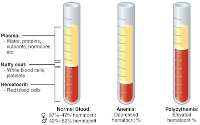 Blood and Plasma | Blood Composition