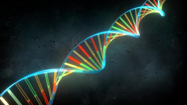 Estructura de la molecula de ADN