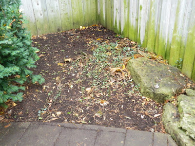 Toronto Gardening Services Bedford Park Backyard Fall Clean up after by Paul Jung