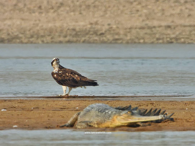 birds of chambal