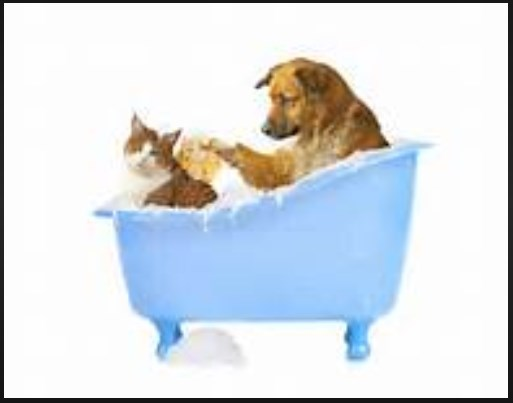 http://www.animalc4re.com/2017/09/cat-and-dog-grooming.html