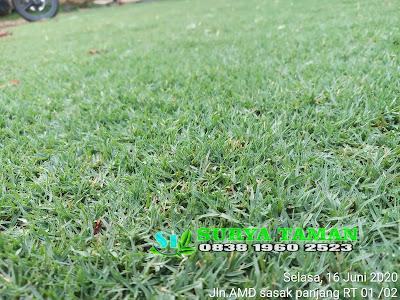 Jual rumput golf di bubulak bogor - SuryaTaman