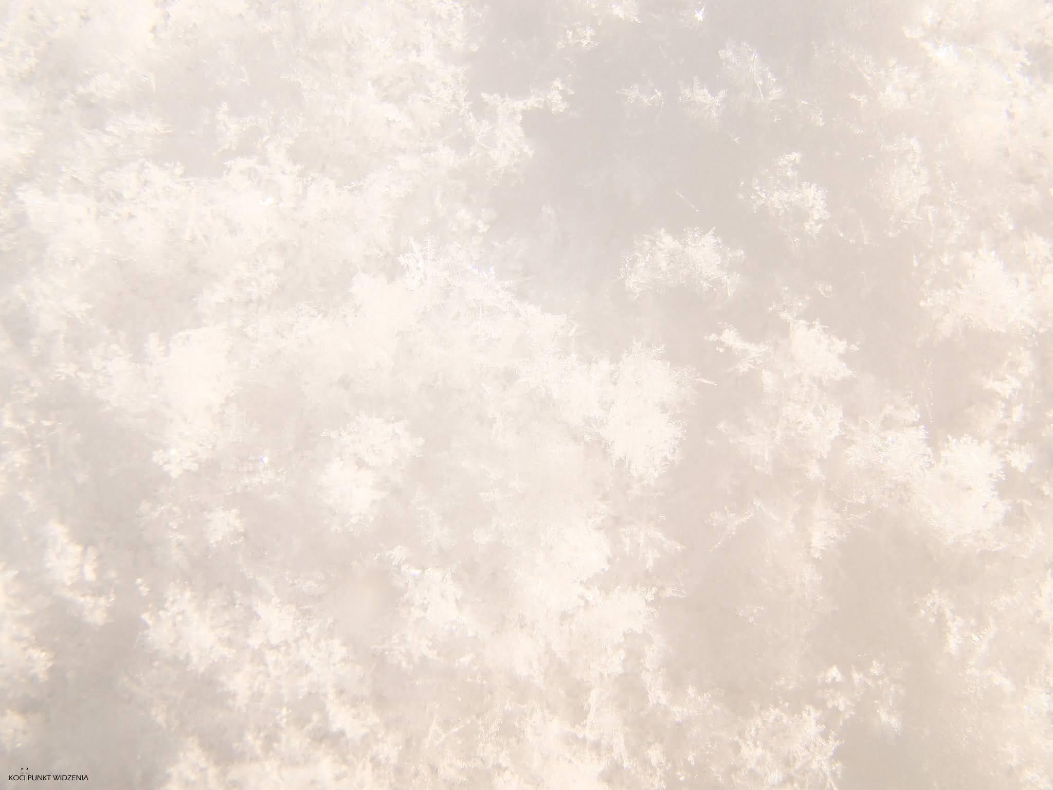 śnieg zdjęcie