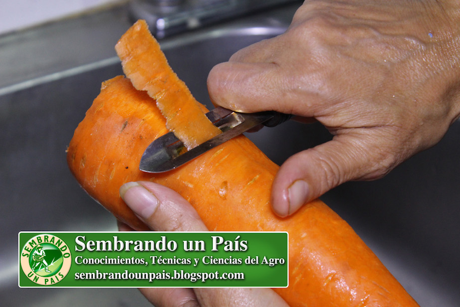 pelando zanahoria