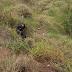 Isac Rocha é localizado: Jovem sofreu acidente na MG-329