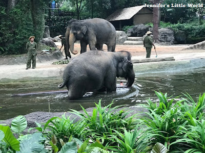 Elephants at Work and Play show, Singapore Zoo