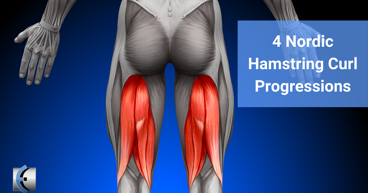 Photo of Top 4 Fridays! 4 Nordic Curl Hamstring Progressions | Modern Manual Therapy Blog
