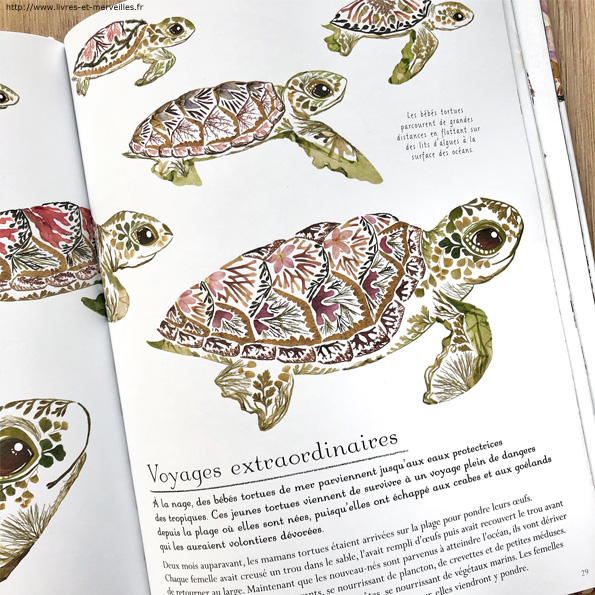 Merveilles marines de Lily Murray et Helen Ahpornsiri - éditions Circonflexe