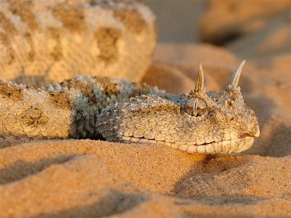 Engerek yılanı - E Harfi ile Hayvan İsimleri