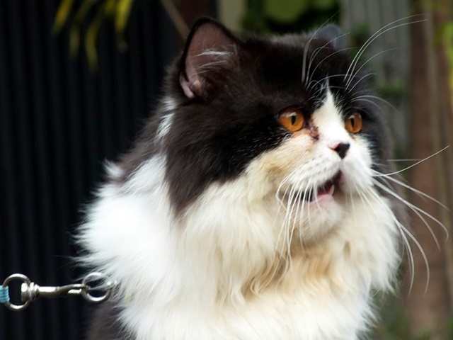Billy : Sang Kucing Penyebab Tanganku Dioperasi Dan Selalu Memberikan Kenangan Tak Terlupakan