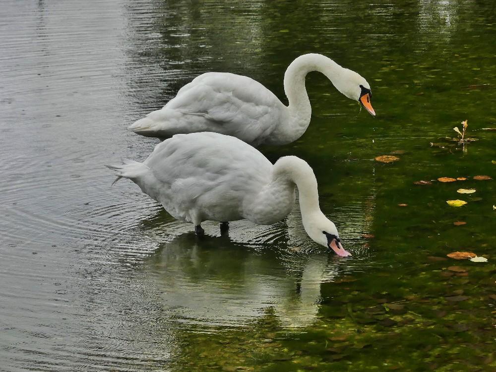 Schaalsee