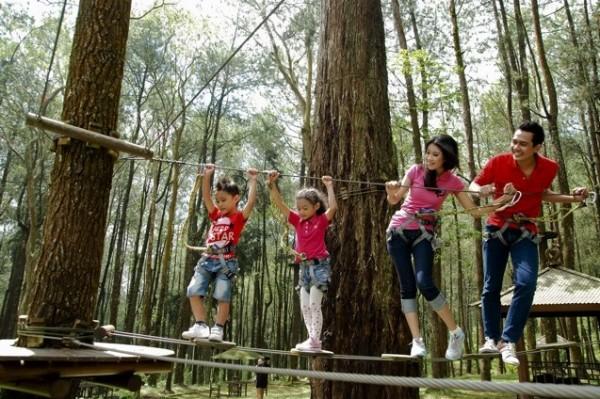 kopeng treetop