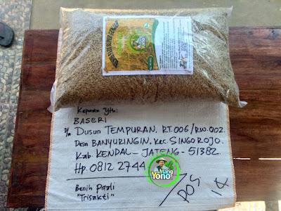 Benih pesanan  BASERI Kendal, Jateng  (Sebelum Packing)