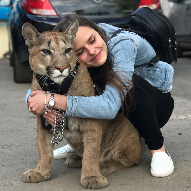 Είναι απλά μια συνηθισμένη γάτα, αλλά μια μεγάλη γάτα. Έχει όλες τις συνήθειες μιας γάτας