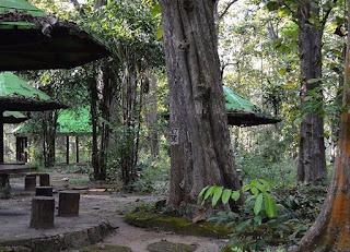 Monumen Hutan Jati Alam Blora