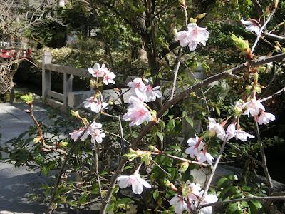 鶴岡八幡宮の春と桜