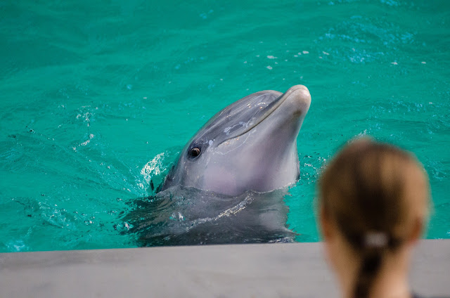 4 Consideration for Prices to Swim with the Dolphins in Mexico