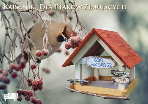 Karmiki dla ptaków zimujących