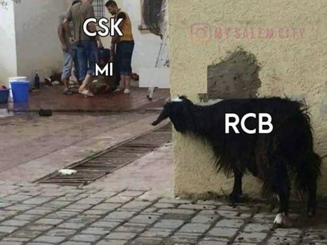 RCB trolls