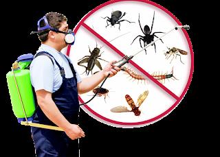 Control de plagas en Madrid: 5 consejos para evitar infestaciones en casa