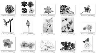 تحميل صور أزهار مختلفة الألوان بدقة عالية1