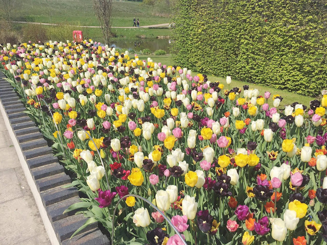 RHS-Harlow-Carr-Yellow-Pink-White-Tulips