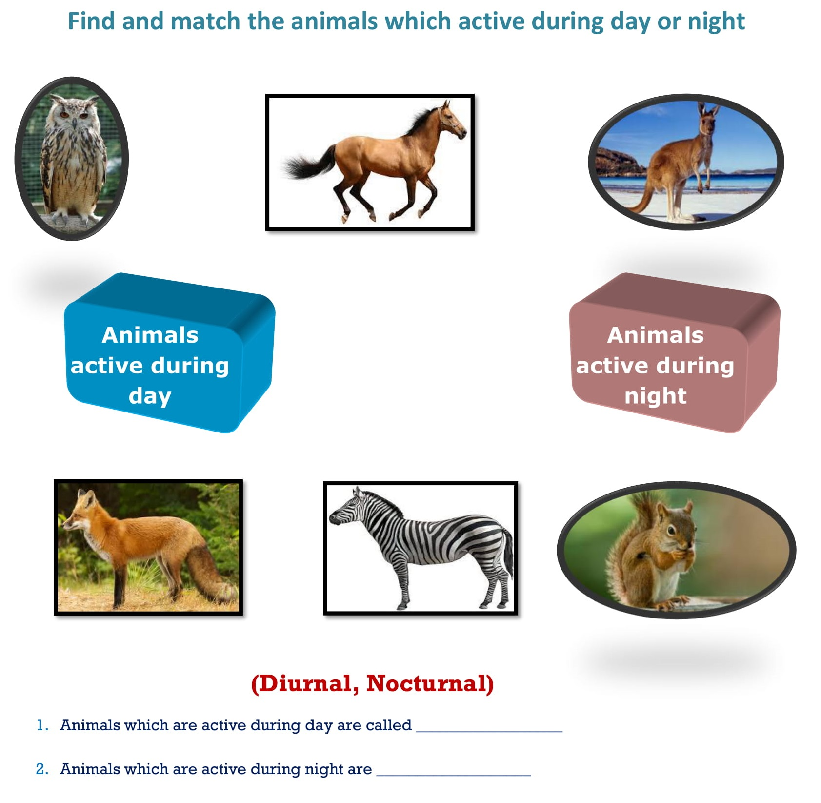 Worksheets Find And Match The Animals Which Active During