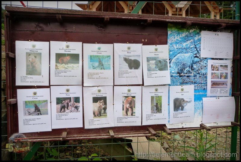 Реабилитационный центр бурого медведя в Карпатах