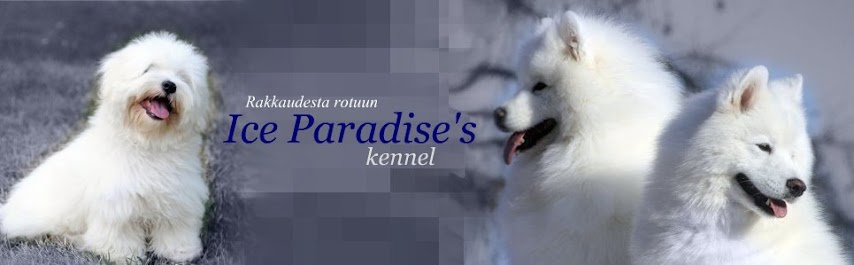 Ice Paradise's kennel