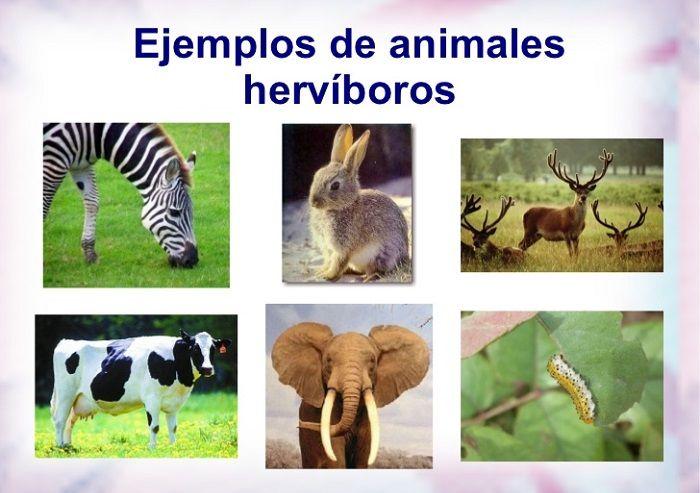 Imágenes Animales Herbívoros