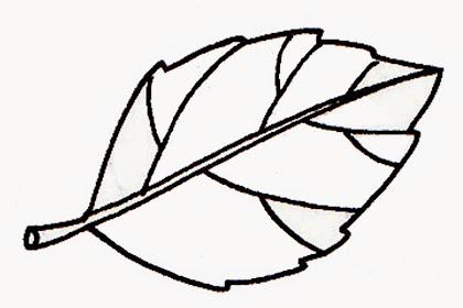 Kumpulan Contoh Gambar Sketsa Daun Apel