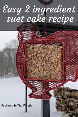 Suet cake recipe for winter birds.