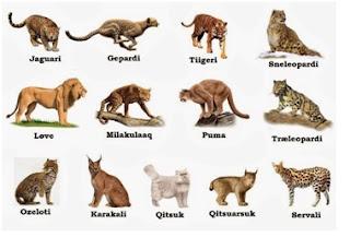 Keanekaragaman jenis pada jenis famili Feliadae (keluarga Kucing)