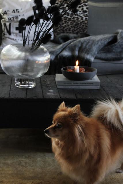 annelies design, webbutik, inspiration, inredning, ljusstake, ljusstakar, athena, hund, pomeranian, vardagsrum, vardagsrummet, vas, tistel, torkade växter,
