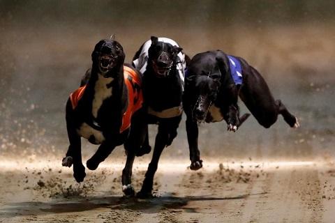 Cần tham gia đua chó một cách hợp pháp