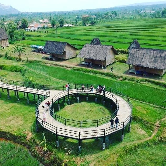 kampung budaya padi pandan wangi