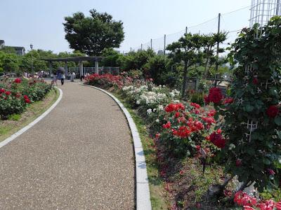 若園公園バラ園 園路