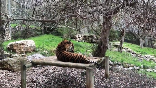 Zoological Garden Dreams Interpretations and Meanings