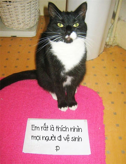 """Mèo chỉ là lũ """"hư thân mất nết"""""""