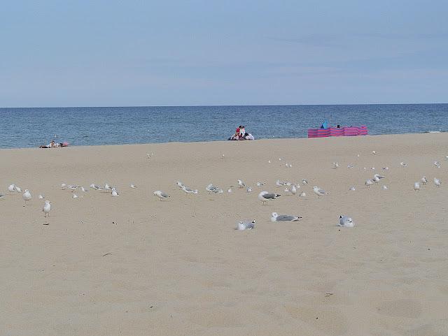 mewy, plaża, Bałtyk, Władysławowo, wrzesień