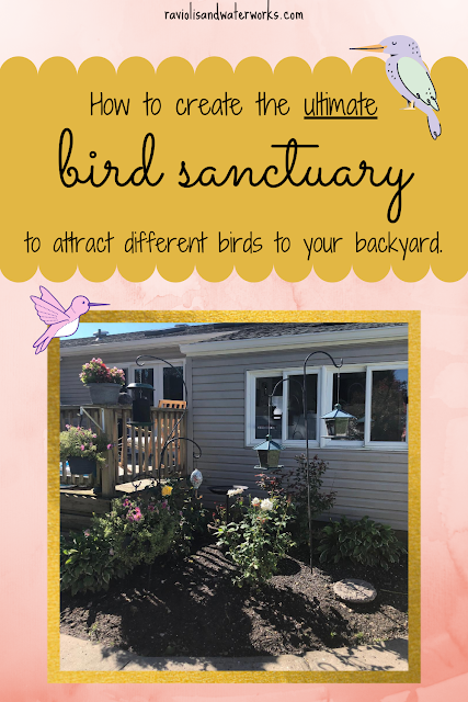 bird sanctuary; bring birds to the yard; bird feeder; why aren't birds coming to my bird feeder; how to attract birds to backyard
