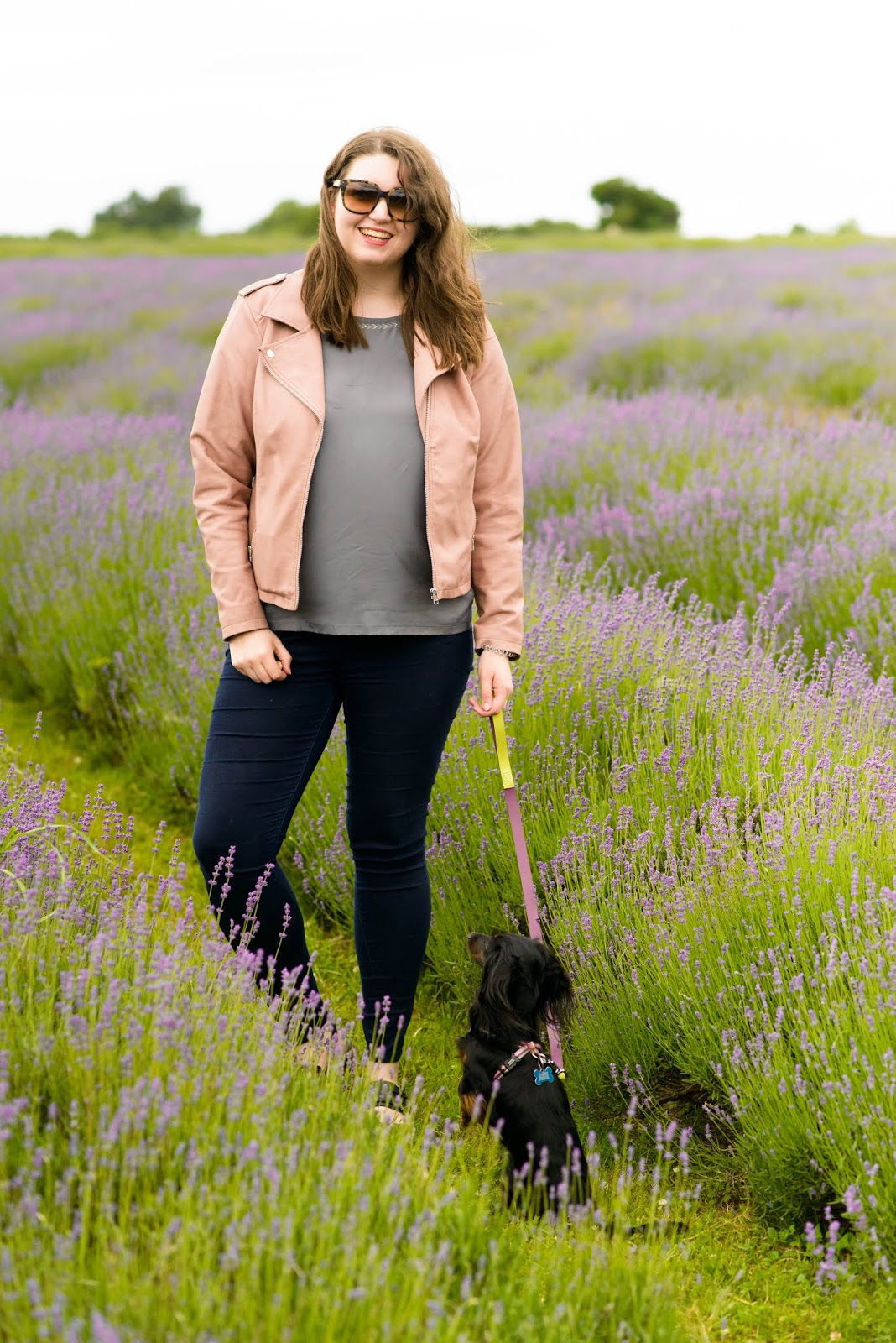 liquidgrain liquid grain lavender fields mayfield dachshund uk