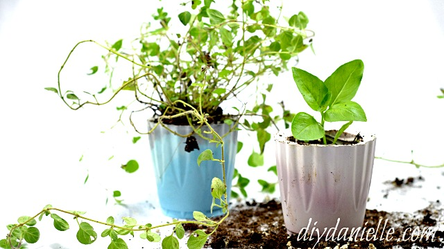 gardening-herbs-gifts-diy-cement-containers-jemma