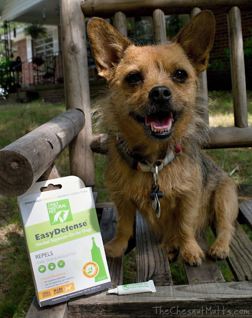 Mini Review: Only Natural Pet EasyDefense Herbal Squeeze-On
