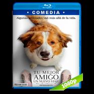 La razón de estar contigo: Un nuevo viaje (2019) BDRip 1080p Audio Dual Latino-Ingles