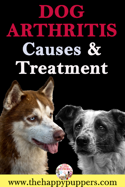 Causes and treatments of arthritis in dogs