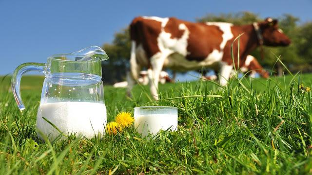 एड्स, cow's milk, गाय का दूध,cow milk benefit,  गाय के दूध के फायदे, gae ka doodh, कैंसर, टीबी, benefit, health, बौद्धिक विकास, health tips, 10 फायदे, हेल्थ, sehat, हेल्थ टिप्स,  digestion, सेहत, brain power स्वास्थ्य,  TB, cancer, AIDS, HIV,eyes,