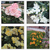 Madirex Fotos - Flores #2